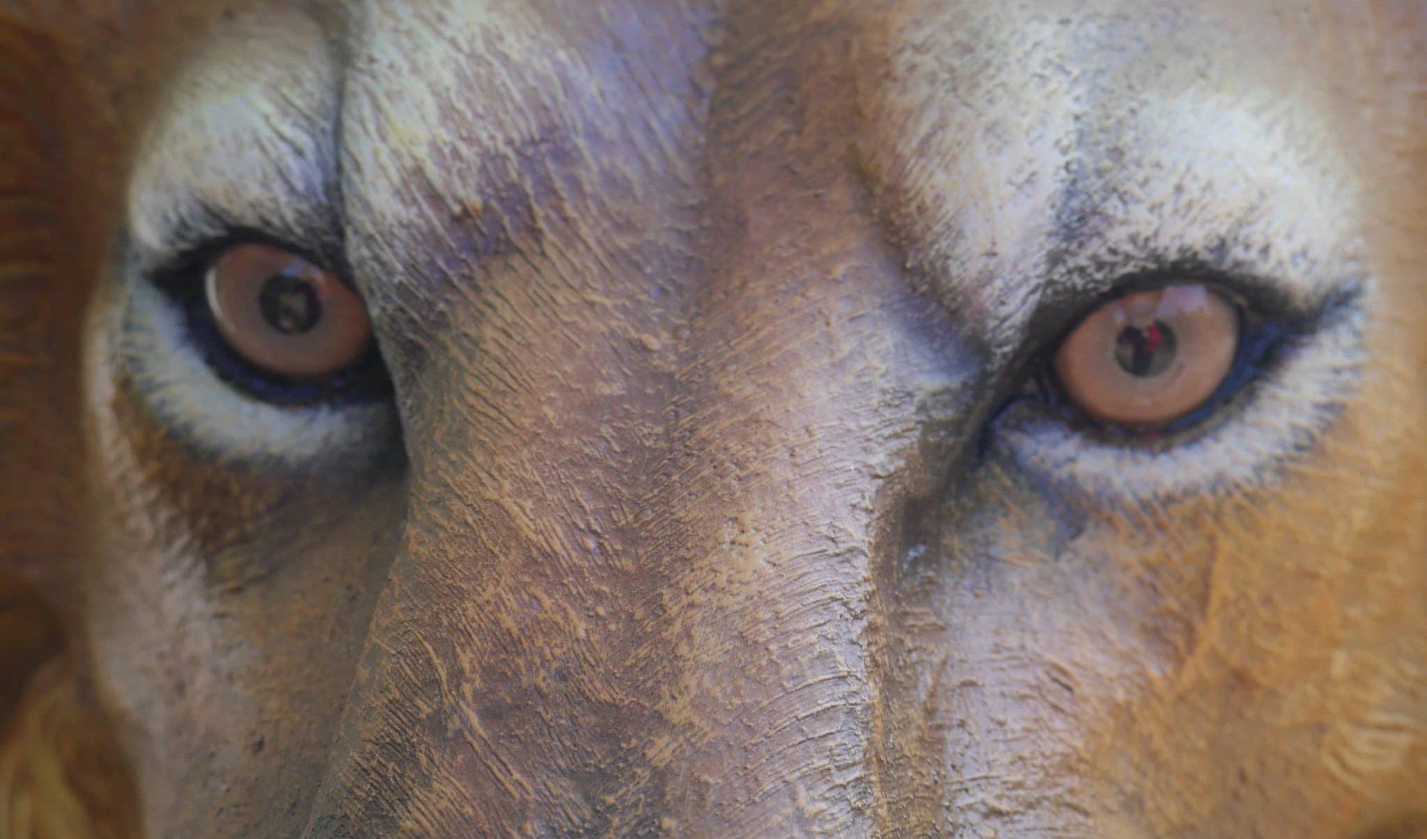 Lion Aslan du film Narnia en décor au parc Fantassia